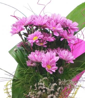Цвете хризантема