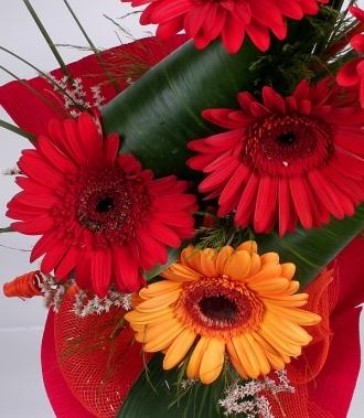 Цветя гербери