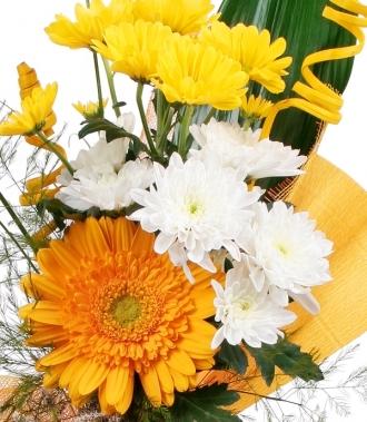 Цветя хризантема, гербер