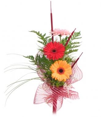 Гербери цветя