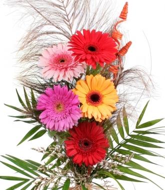 Гербери доставка цветя