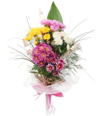 Хризантеми цветя