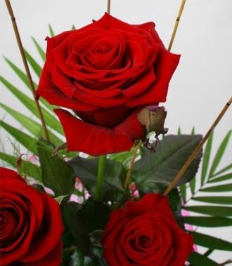 Огнени рози